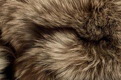 Polarer Fox-Pelz. Nützlich als Beschaffenheit lizenzfreie stockbilder
