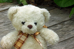 Polares Bear Lizenzfreies Stockfoto