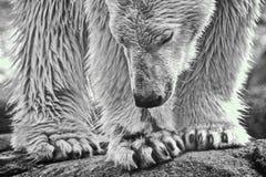Polares monotones Lizenzfreie Stockfotos