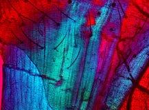 Polariserend, abstracte micrograaf van spierweefsel van een mot Royalty-vrije Stock Foto's