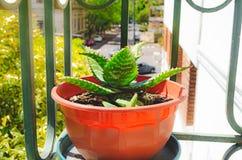 Polaroidübertragung des Kaktus Lizenzfreie Stockfotos