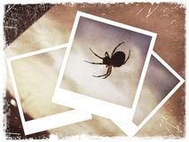 Polaroid collage of spider Stock Photos