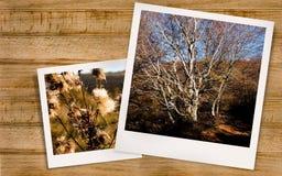 Polaroid- foto van Autumn Landscape Stock Foto