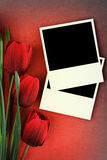 Polaroid frame and tulips. On vintage background Royalty Free Stock Photography