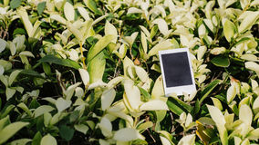 Polaroid on green leaf. Background Stock Photos
