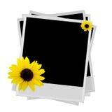 Polaroid mit Sonnenblume Stockbilder