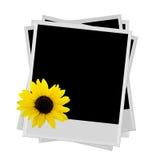 Polaroid mit Sonnenblume Lizenzfreies Stockbild