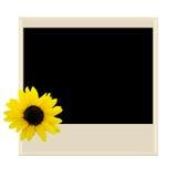 Polaroid mit Sonnenblume Stockfotografie