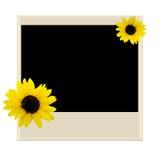 Polaroid mit Sonnenblume Stockfotos