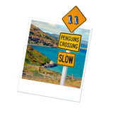 Polaroid penguins sign, New Zealand Stock Images