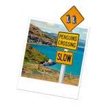Polaroid penguins sign, New Zealand Stock Images
