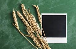 Polaroid photo frame. Polaroid photo frame with wheat on green chalkboard background Stock Photos