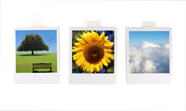 Polaroid photos Royalty Free Stock Photos