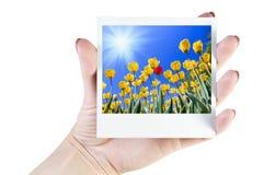 Polaroid photos of flowers Royalty Free Stock Photo