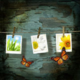 Polaroid pictures  against old crackled backdrop. Polaroid pictures with butterflies  against old crackled backdrop Royalty Free Stock Images