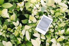 Polaroid Polaroid on green leaf. Polaroid on green leaf background Stock Images