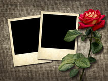 Polaroid-style photo on a linen background with red rose Stock Photography