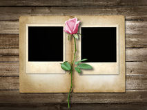 Polaroid-style photo on the wooden background with pink  rose Royalty Free Stock Images