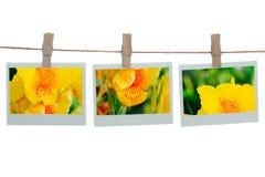 Polaroid templates with canna flower Royalty Free Stock Photo