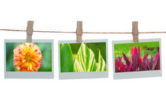 Polaroid templates with flower and leaves Stock Photo