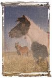 Polaroid transfer of horses Stock Photography
