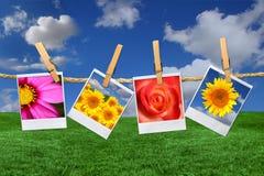 Polaroidbilder der Blumen gegen einen schönen Himmel Lizenzfreie Stockbilder