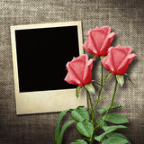 Polaroidkamera-stil foto på en linnebakgrund med röda rosor Royaltyfri Foto