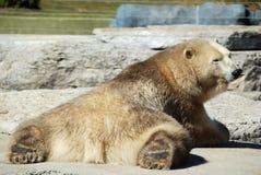 polart vila för björn Arkivfoton