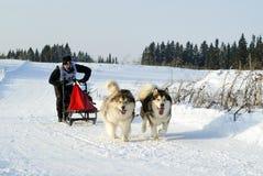 Sled Dog Racing Royalty Free Stock Photos