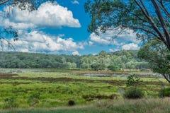 PolBluemoerassen, Barrington Tops, NSW, Australië Stock Afbeelding