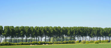 Polder landscape Royalty Free Stock Photography