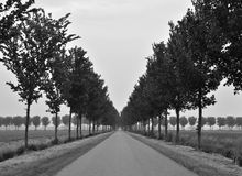 Polder Landscape with Straight Road, B&W Royalty Free Stock Photo