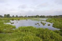 Polder Poelgeest. Natuurontwikkeling in Polder Poelgeest; Nature development in Polder Poelgeest stock photo