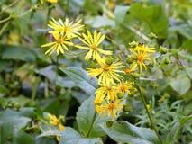 pole żółte kwiaty Zdjęcia Stock