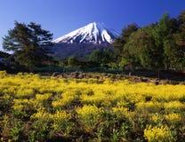 pole żółte kwiaty Obraz Royalty Free