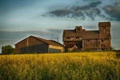 Pole żółty rapeseed i drewniana stajnia fotografia stock