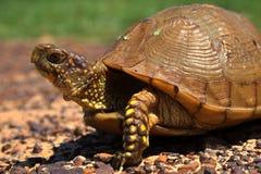 pole żółwia Zdjęcia Royalty Free