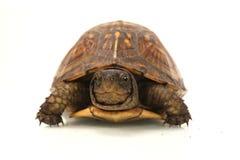 pole żółwia Obraz Stock