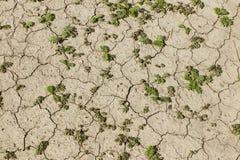 Pole żyto i jęczmień Maturation przyszłościowego żniwa Agrarny sektor rolniczy przemysł Rośliny gospodarstwo rolne Rosnąć zdjęcie royalty free