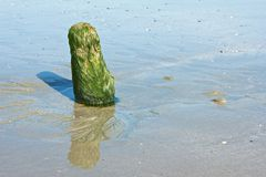 Pole and Algae Stock Photos