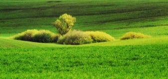 pole błękitny chmurna śródpolna trawy zieleni ranek nieba wiosna piękny wschód słońca w polu Obrazy Royalty Free