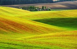 pole błękitny chmurna śródpolna trawy zieleni ranek nieba wiosna piękny wschód słońca w polu Zdjęcia Royalty Free