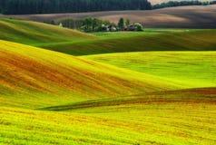 pole błękitny chmurna śródpolna trawy zieleni ranek nieba wiosna piękny wschód słońca w polu Obraz Royalty Free