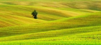 pole błękitny chmurna śródpolna trawy zieleni ranek nieba wiosna piękny wschód słońca w polu Zdjęcie Royalty Free