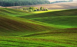 pole błękitny chmurna śródpolna trawy zieleni ranek nieba wiosna piękny wschód słońca w polu Zdjęcie Stock