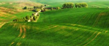 pole błękitny chmurna śródpolna trawy zieleni ranek nieba wiosna piękny wschód słońca w polu Obraz Stock