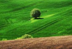 pole błękitny chmurna śródpolna trawy zieleni ranek nieba wiosna piękny wschód słońca w polu Zdjęcia Stock