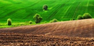 pole błękitny chmurna śródpolna trawy zieleni ranek nieba wiosna piękny wschód słońca w polu Obrazy Stock