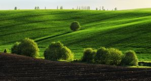 pole błękitny chmurna śródpolna trawy zieleni ranek nieba wiosna piękny wschód słońca w polu Fotografia Royalty Free