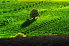 pole błękitny chmurna śródpolna trawy zieleni ranek nieba wiosna piękny wschód słońca w polu Fotografia Stock